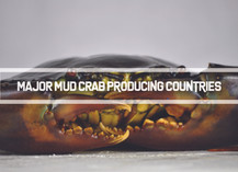 Major Mud Crab Producing Countries | Business Insights