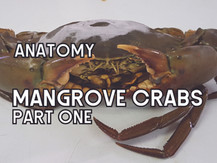 The Anatomy of Mangrove Crabs (Part One) | Aquaculture Technology