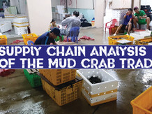 Supply Chain Challenges | and their role in the Mud Crabs Trade
