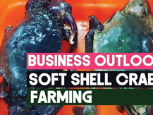 An Overview on the Soft Shell Crab Industry Q3 2019 | Business Insights