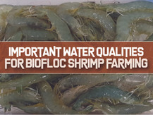 Important Water Parameters for Indoor Biofloc Shrimp Farming | Aquaculture Technology