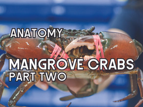 The Anatomy of Mangrove Crabs (Part Two) | Aquaculture Technology