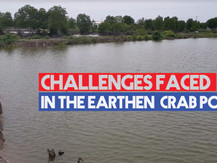 Mud Crab Aquaculture | Challenges faced in the traditional pond system