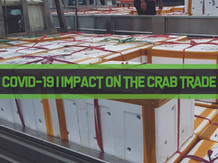 COVID-19 Winner & Losers in the Mud Crab Trade | Business Insights