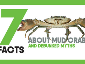 Top 7 Facts and Myths about Mud Crabs | Mud Crab Aquaculture