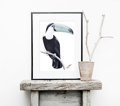 Toucan - art print