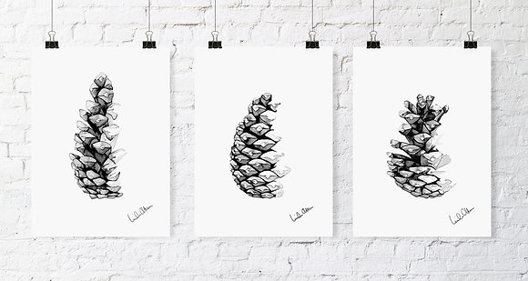Closed pine cone - art print