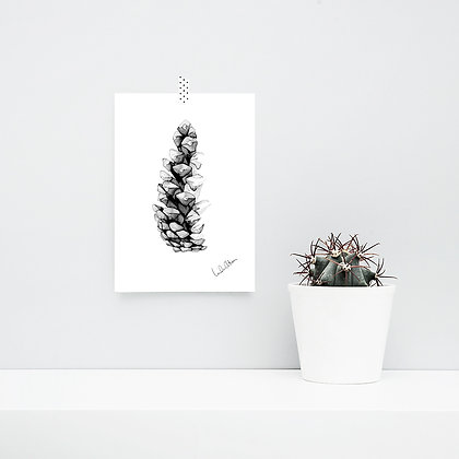 Tall pine cone - art print