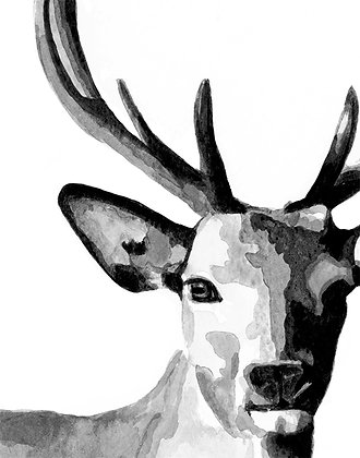 Deer portrait -art print
