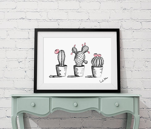 three flowering cacti - art print