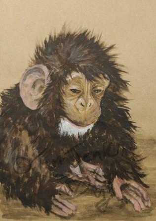 Toy Chimp