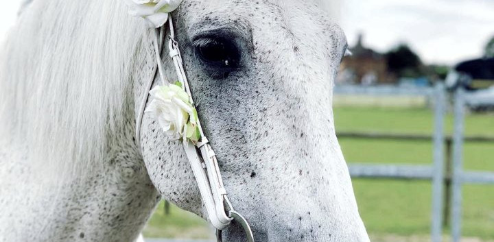 1st-choice-wedding-unicorn-white-horse.j