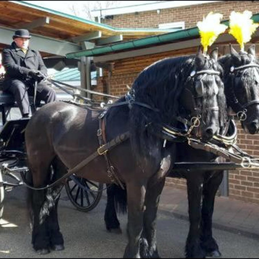 Horse and cart Funeral