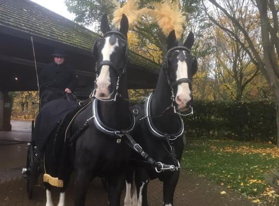 1st-choice-funeral-horse-1.jpg
