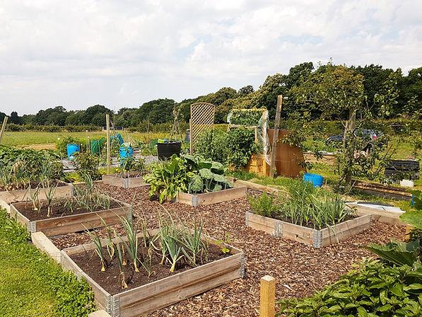 Our-Community-Garden-1.jpg