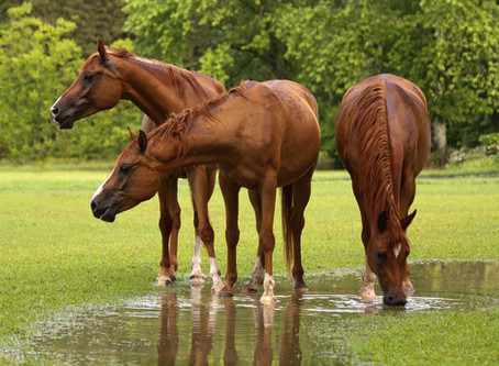 You can lead a horse to water – you cannot make it drink!