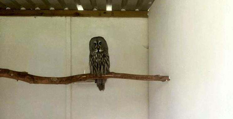1st-choice-animals-owl 1.jpg