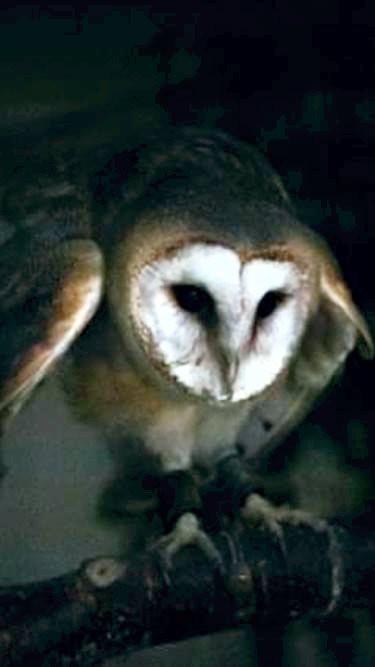 1st-choice-animals-barn-owl 1.jpg