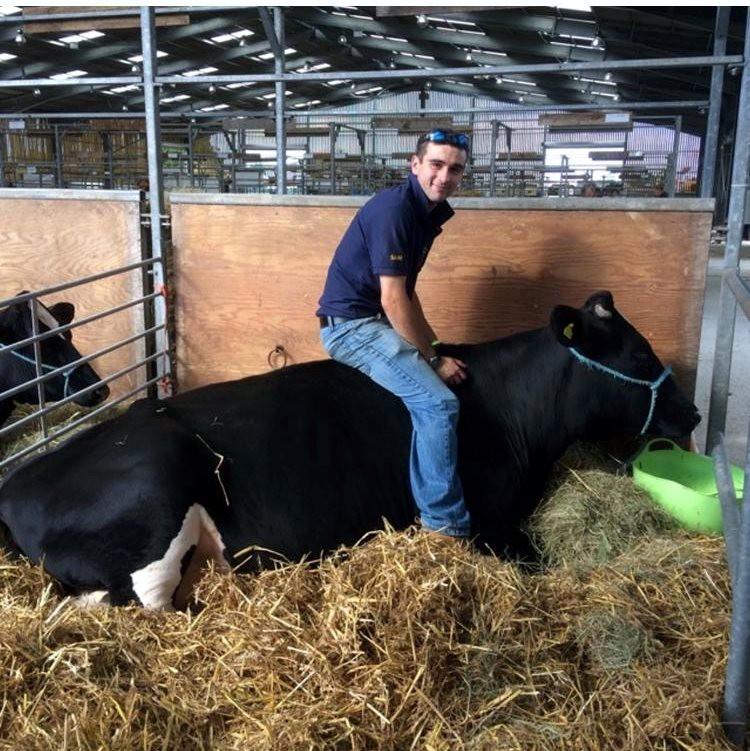 1st-choice-animals-trained-cow 1.jpg
