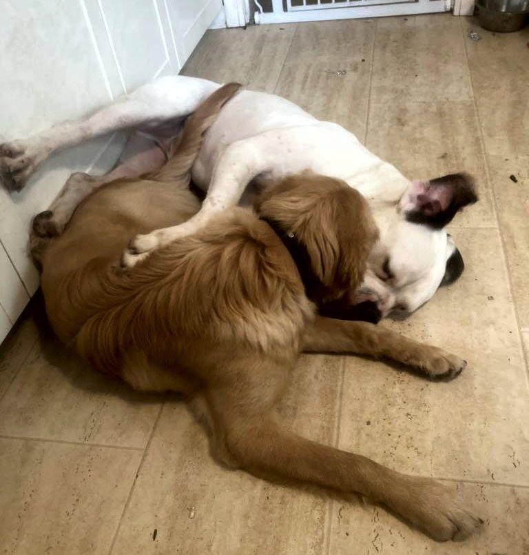 1st-choice-animals-dogs-best-friends.jpg