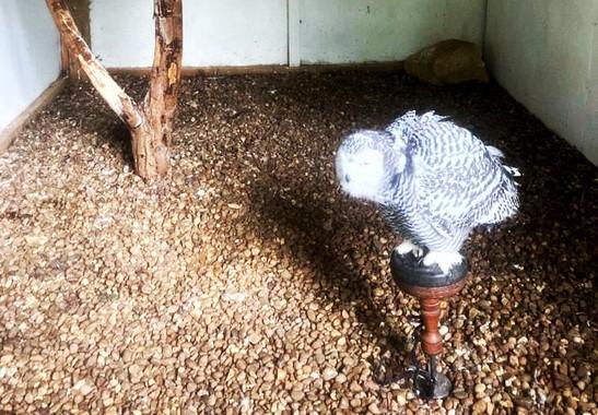 1st-choice-animals-owl 2.jpg