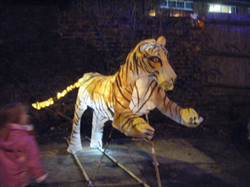 Lantern Parade Tiger Last Ten years