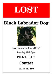 Lost Dog.jpg