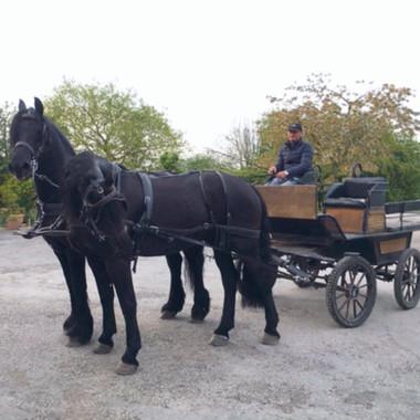Driving Horses