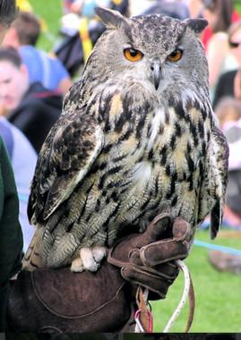 1st-choice-animals-owl 3.jpg