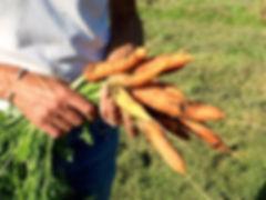 Bunch of carrots.jpg