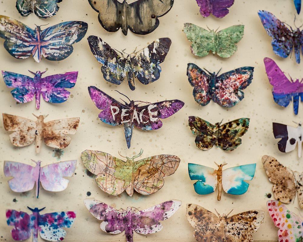 Moth cases- student response