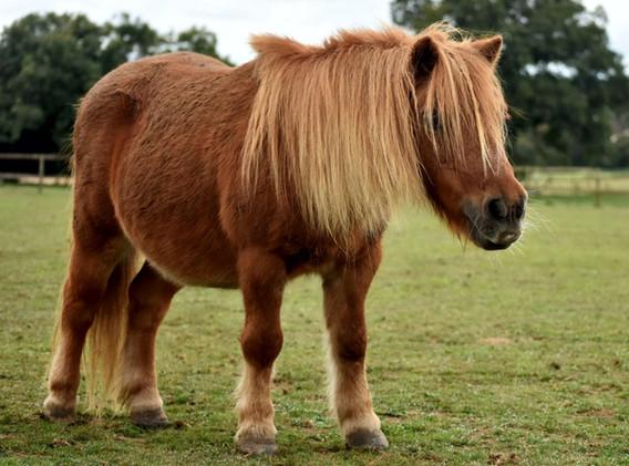 1st-choice-pony-1.jpg