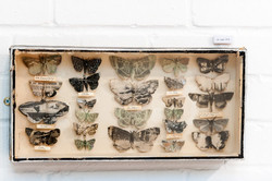 Moth boxes Jessies Collection of Years 1