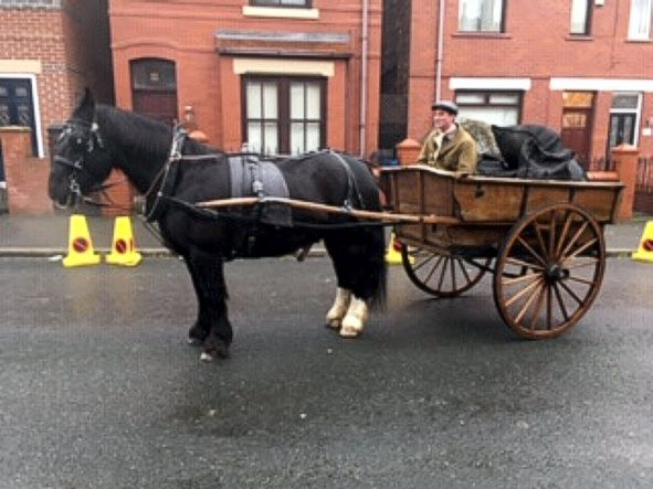 1st-choice-animals-horse-and-cart.jpg