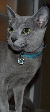Halsbandje voor katten, voordelen en nadelen