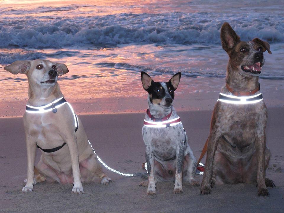 Gracie, Buddy and Lola
