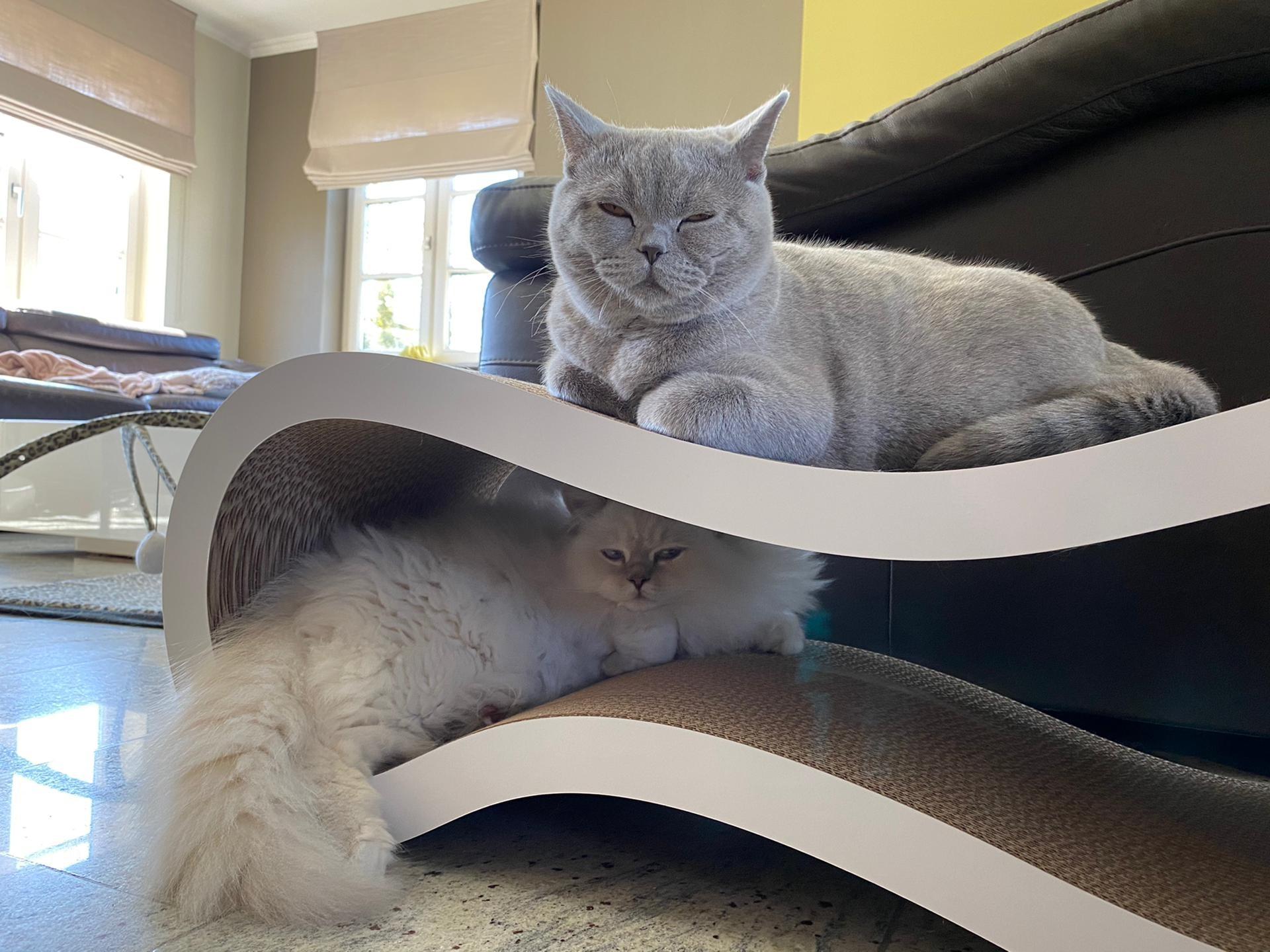 Lily en Oscar