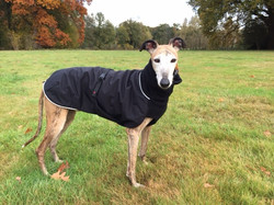 Chilly Dogs winterjas Galgo Christy