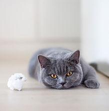 verveling kattenspeelgoed.JPG
