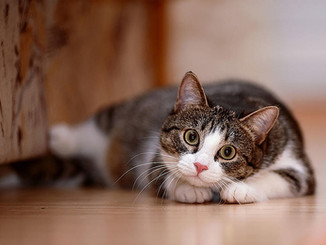 Cat crazy.jpg