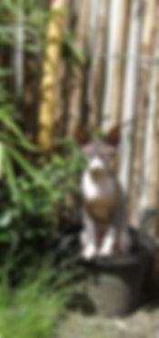 Ongewenste katten in de tuin