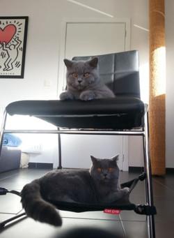 Armani en Kimi