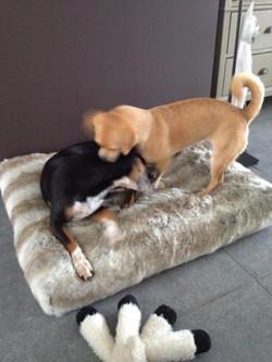 Peanut en Zilly
