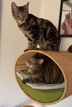 Bobijntje en Toefie