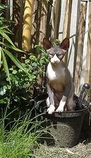 ongewenste katten in de tuin.JPG