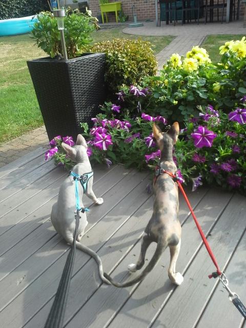 Feaby en Remi