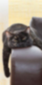 Kattengedragstherapie, verveling