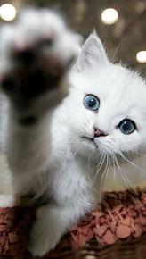 Socialiseren is belangrijk voor de mentale gezondheid van je kat