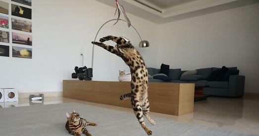Flying Frenzy, Tabby Tijger, Da Bird, speelhengel voor katten