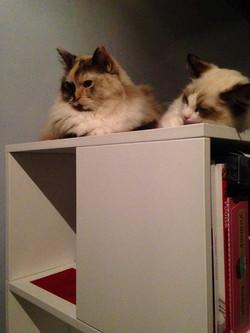 Luna en Vivienne